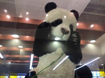 Panda_ueno_3